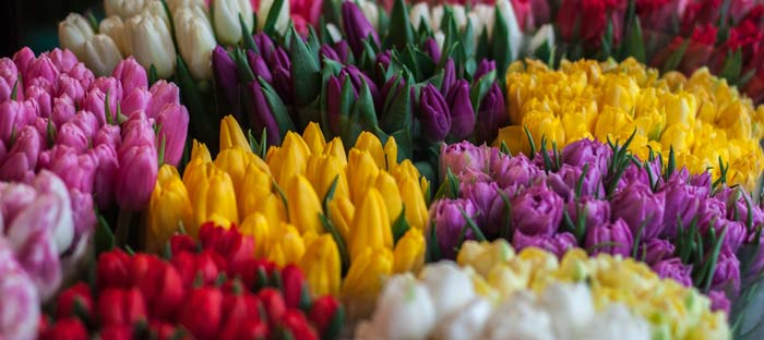 Spring is a wonderful time to enjoy shopping, dining, and the wonderful sights in Doylestown, Bucks County PA